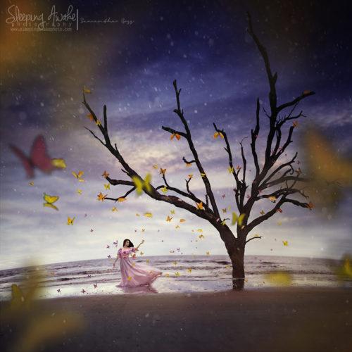 "Image Title:""Butterfly Garden"""