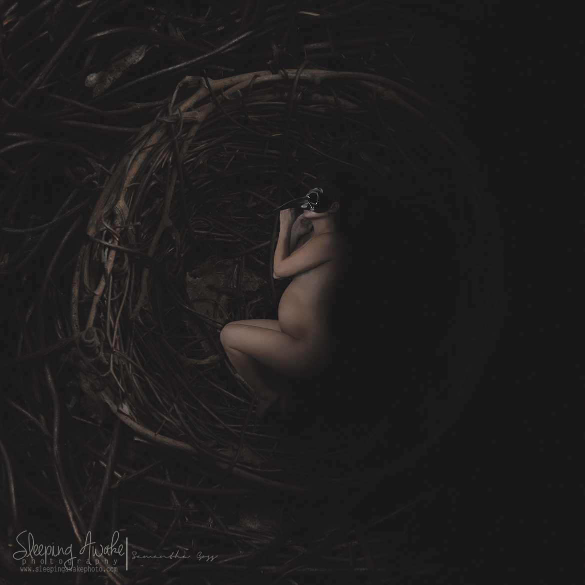 """Image Title:""""The Raven"""""""